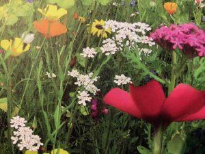 Gräser und Blumen